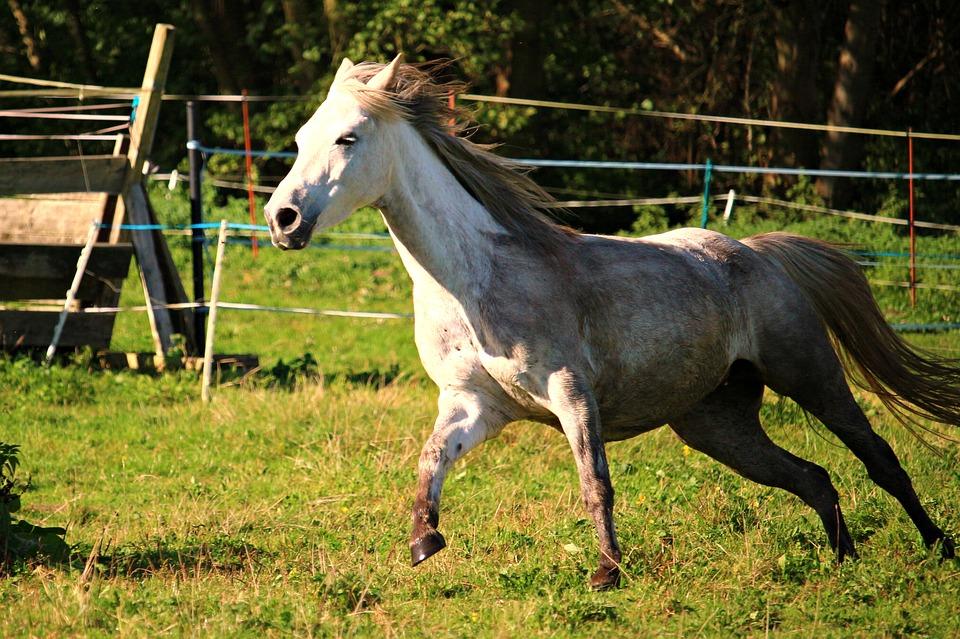 Comment réussir le pansage d'un cheval?