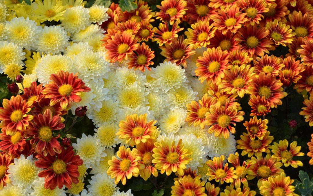 Offrir des fleurs avec internet