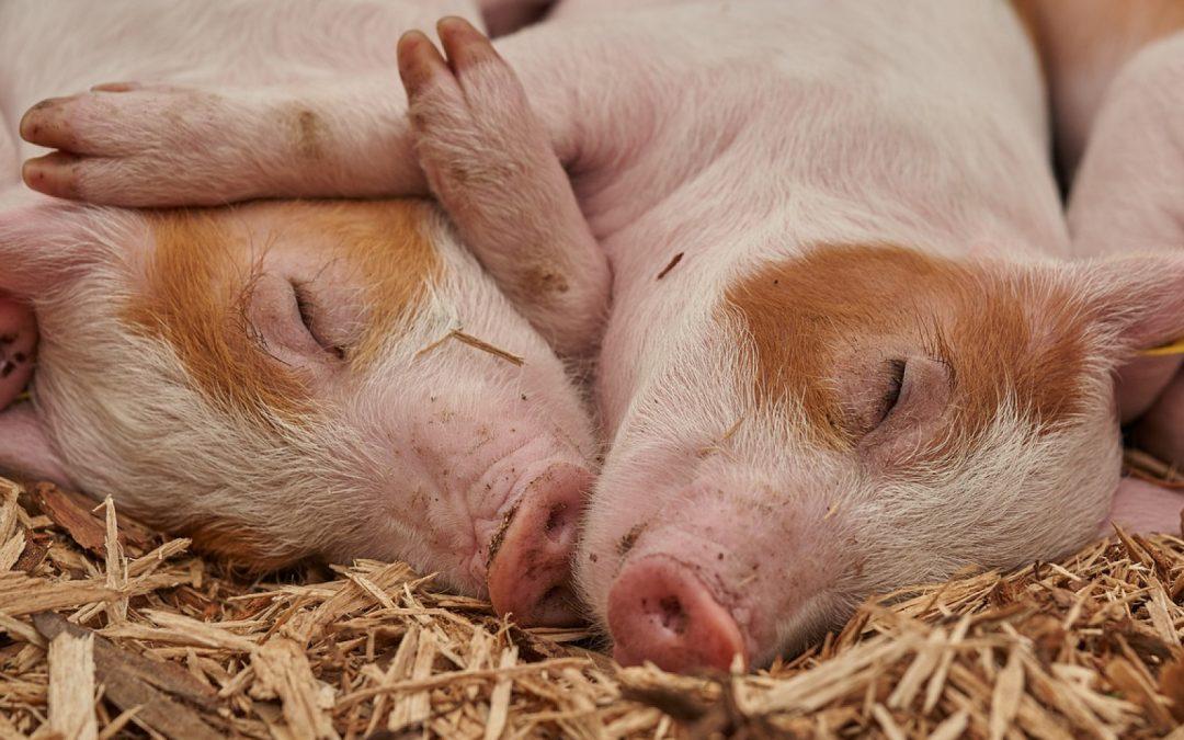 Comment prendre soin des animaux de la ferme ?