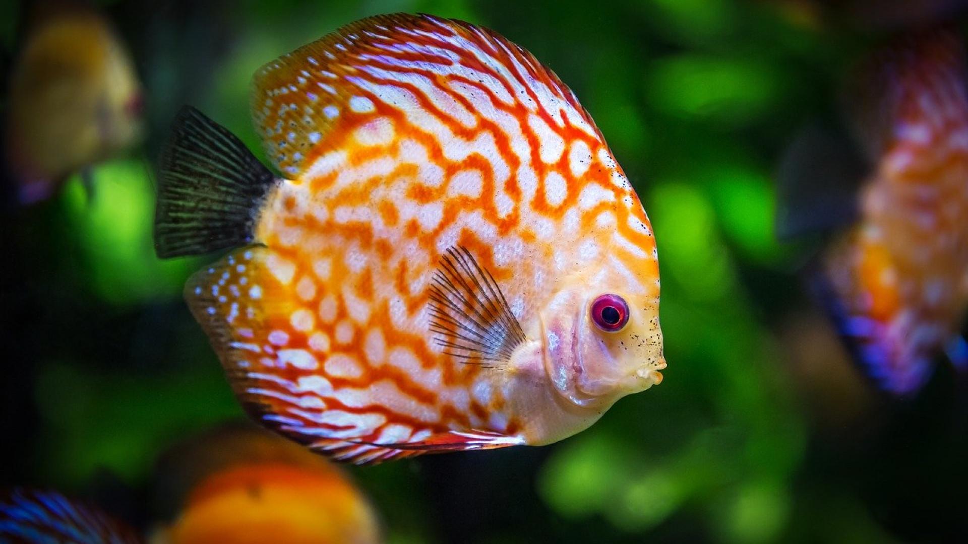 Adoptez le bon matériel pour la pêche