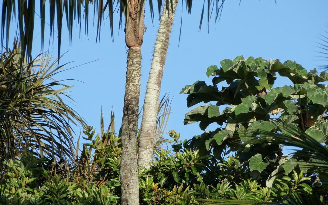 photo d'un paysage en Guyane française